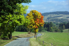 Colorful tree close roads Royalty Free Stock Image