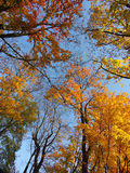 Colorful tree crowns Royalty Free Stock Image