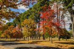 Autumn colours in Macedon, Australia. Colorful tree dotted road in Macedon Ranges,Victoria,Australia Royalty Free Stock Photos