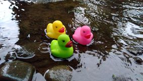 three duck toys in the rain water stock photos