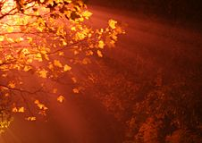Colorful tree in fog and light Royalty Free Stock Photo