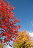 Colorful tree foliage and blue sky Stock Photos