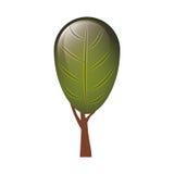 Colorful tree with foliage shape leaf ovoid Royalty Free Stock Photo