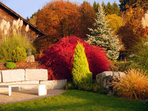 Colorful tree garden. Bright colorful tree garden with bench Stock Photo