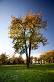 Colorful Tree With Green Grass And Blue Sky Royalty Free Stock Photos