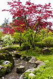 Colorful tree in Kenroku-en gardens Stock Image