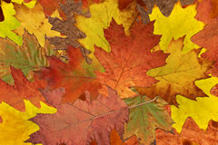 Colorful tree leaves Stock Photo