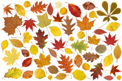 Colorful tree leaves Stock Images