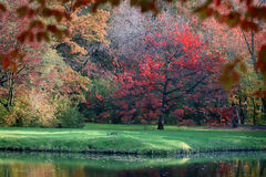 Colorful tree and pond Stock Image