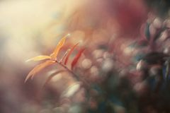 Colorful tree sprout. With atmospheric backround and baklight stock image