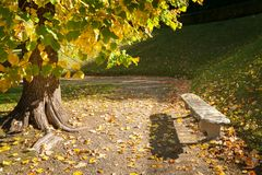 Colorful tree and stone bench in an italian park in autumn Royalty Free Stock Photography
