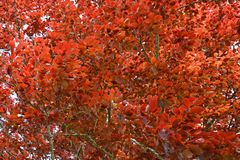 The colorful tree Royalty Free Stock Image