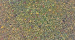 Colorful Tree Tops Autumn. Aerial view of the colorful tree tops autumn. View from the bird-eye view stock video footage