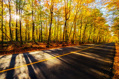 By the Colorful Treed Autumn Road Stock Photo
