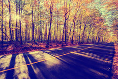 By the Colorful Treed Autumn Road - Vintage Stock Image