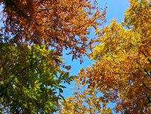 Colorful Trees. Some Colorful Trees in Autumn Royalty Free Stock Photography
