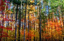 Colorful Trees Stock Photos