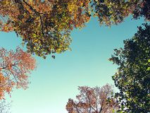 Colorful trees against blue sky Stock Photo