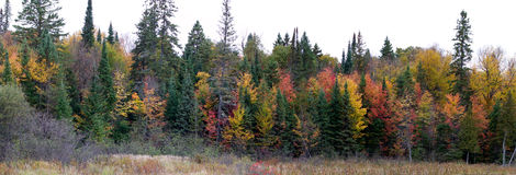 Colorful trees in Algonquin Park Stock Photos