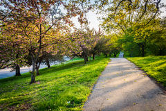Free Colorful Trees Along A Path In Druid Hill Park, Baltimore, Maryl Royalty Free Stock Photography - 71376357