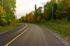 Colorful trees along a country road Stock Images