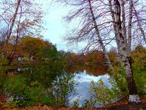 Colorful trees around the pond Royalty Free Stock Photos