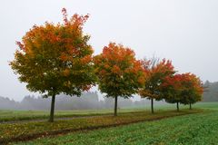 Colorful trees in autumn Stock Images