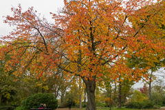 Colorful Trees in Autumn at Leases Park, Newcastle, England Royalty Free Stock Image