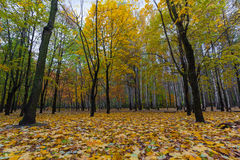 Colorful trees in autumn park Stock Photos