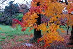 Colorful trees in autumn Royalty Free Stock Photos