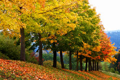Colorful trees in autumn Royalty Free Stock Image