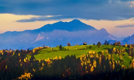 Fall colors. Colorful trees in Bucegi Mountains, Romanian Carpathians Royalty Free Stock Photography