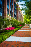 Colorful trees and bushes along a sidewalk in downtown Richmond, Royalty Free Stock Photo