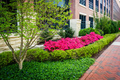 Colorful trees and bushes along a sidewalk in downtown Richmond, Stock Images