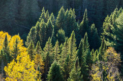 Colorful trees Royalty Free Stock Photos