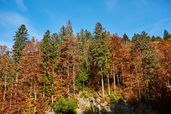 Colorful trees in the fall. Autumn landscape with various colorful trees Stock Images