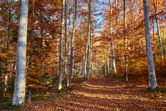 Colorful trees in the fall. Autumn landscape with various colorful trees Royalty Free Stock Photography