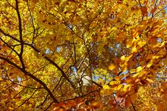 Colorful trees in the fall. Autumn landscape with various colorful trees Royalty Free Stock Images