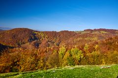 Colorful trees in the fall. Autumn landscape with various colorful trees Royalty Free Stock Image