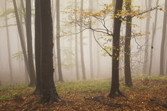 Colorful trees in a forest with fog in autumn Stock Photo