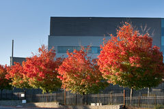 Colorful trees in front of office building Royalty Free Stock Images