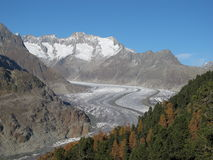 Colorful Trees, Glacier And Mountains. Larch Forest and Aletschgletscher in the autumn stock photos