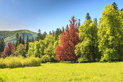 Colorful trees and green forest. Majestic forest in the sunshine Stock Images