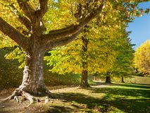Colorful trees in an italian park in autumn Royalty Free Stock Photography