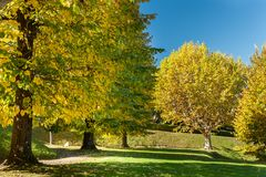 Colorful trees in an italian park in autumn Royalty Free Stock Photo