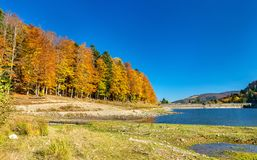 Colorful trees at the lakeside of Lac de la Lauch in the Vosges mountains - Haut-Rhin, France. Colorful trees at the lakeside of Lac de la Lauch in the Vosges Royalty Free Stock Image
