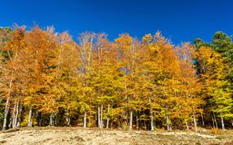 Colorful trees at the lakeside of Lac de la Lauch in the Vosges mountains - Haut-Rhin, France. Colorful trees at the lakeside of Lac de la Lauch in the Vosges Stock Photo