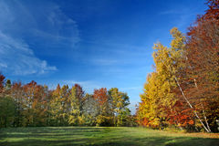 Colorful trees and meadow Royalty Free Stock Images