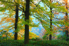 Colorful trees Royalty Free Stock Photo