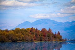Colorful Trees near the Lake. Trees with red and yellow leaves next to the peaceful lake Stock Photography